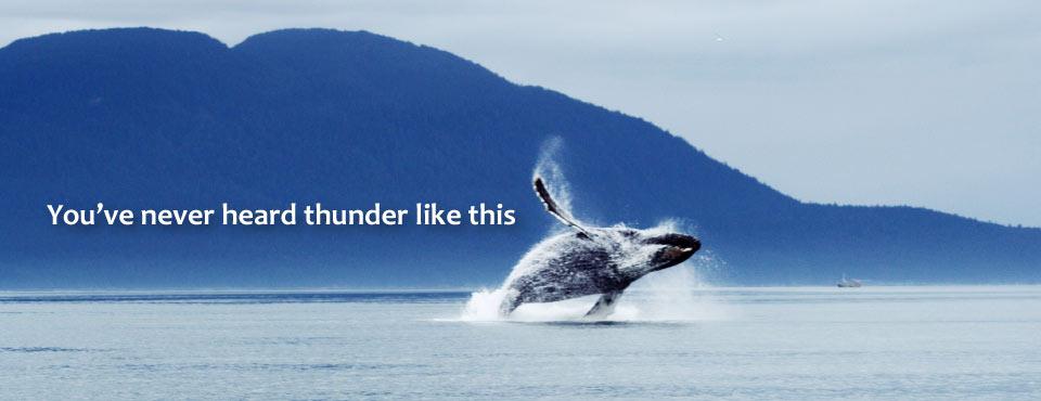 Whale in Southeast Alaska